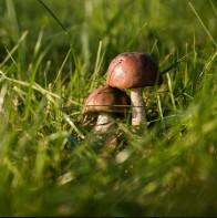 corso-funghi-napoli