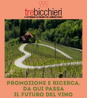 box-trebicch-18-21giugno