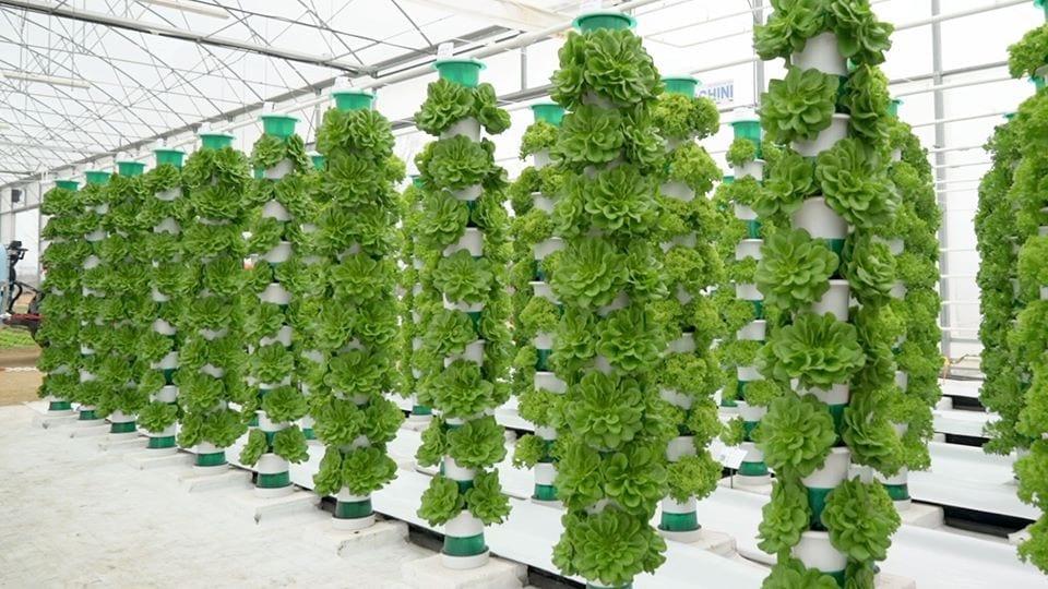 Coltivazione verticale in idroponica