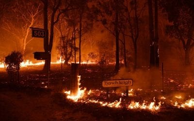 Un bosco australiano in fiamme