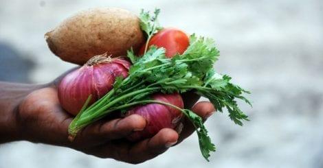 Ortaggi freschi nelle mani di un contadino