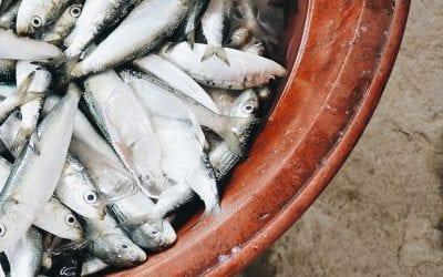 Alici fresche, appena pescate