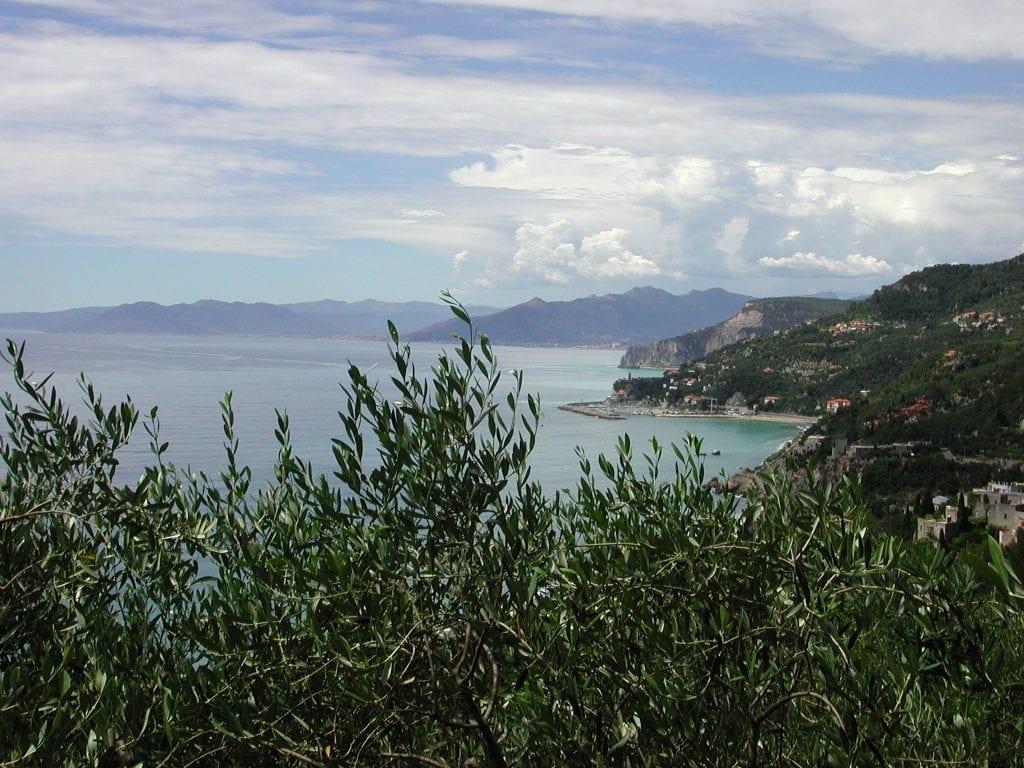 Ruffino, ulivi