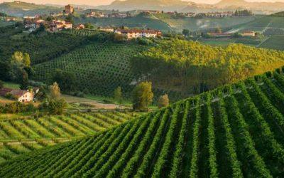Un panorama vitivinicolo italiano