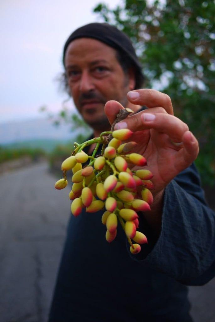 grappoli verdi DI PISTACCHIO carmeloo chiaramonte