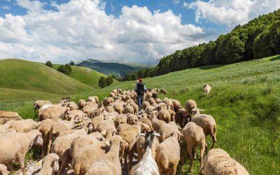 Formaggi di pecora abruzzesi. Guida ai migliori