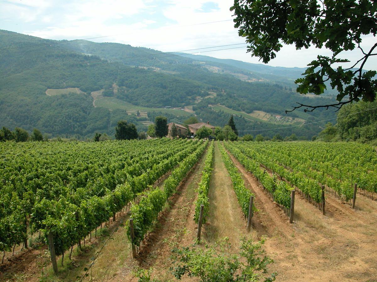 Rufina vino Grignano-Paquito