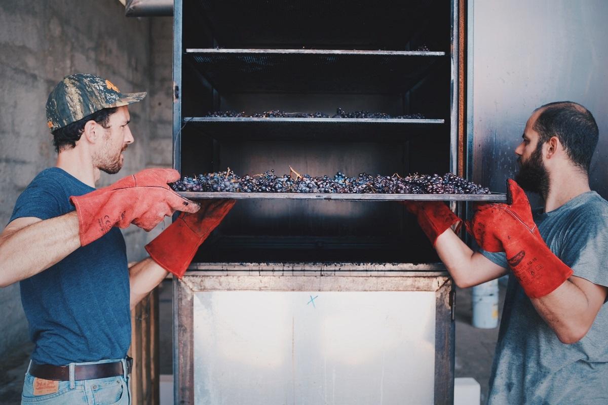 L'affumicatore dell'uva a La Cattiva