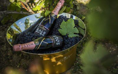 Secchiello con due bottiglie di champagne in vigna