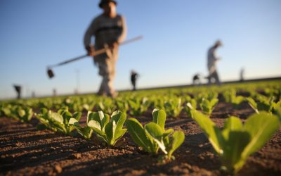 Braccianti agricoli in campo