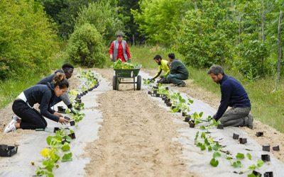 Semina di un orto nella città di Nantes