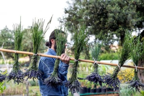 Orti Geometrici. A Pescara due abruzzesi coltivano prodotti locali per produrre fermentati