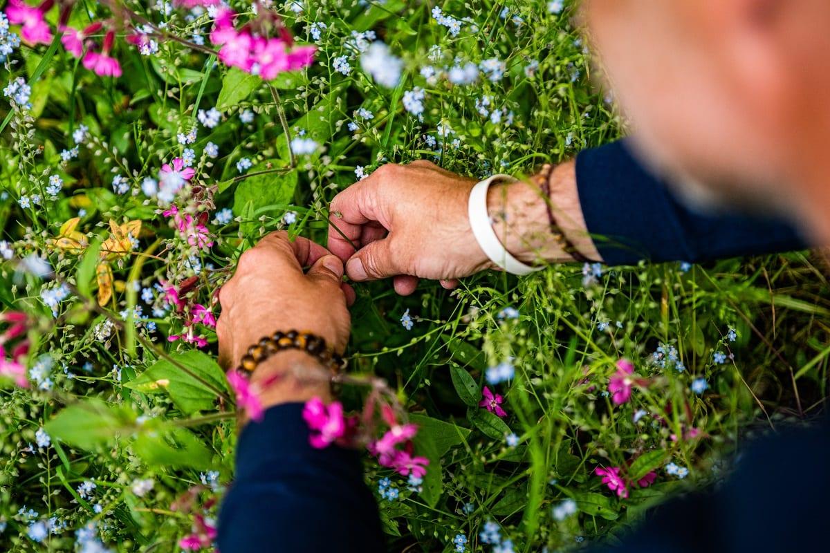 Raccolta di fiori eduli in montagna