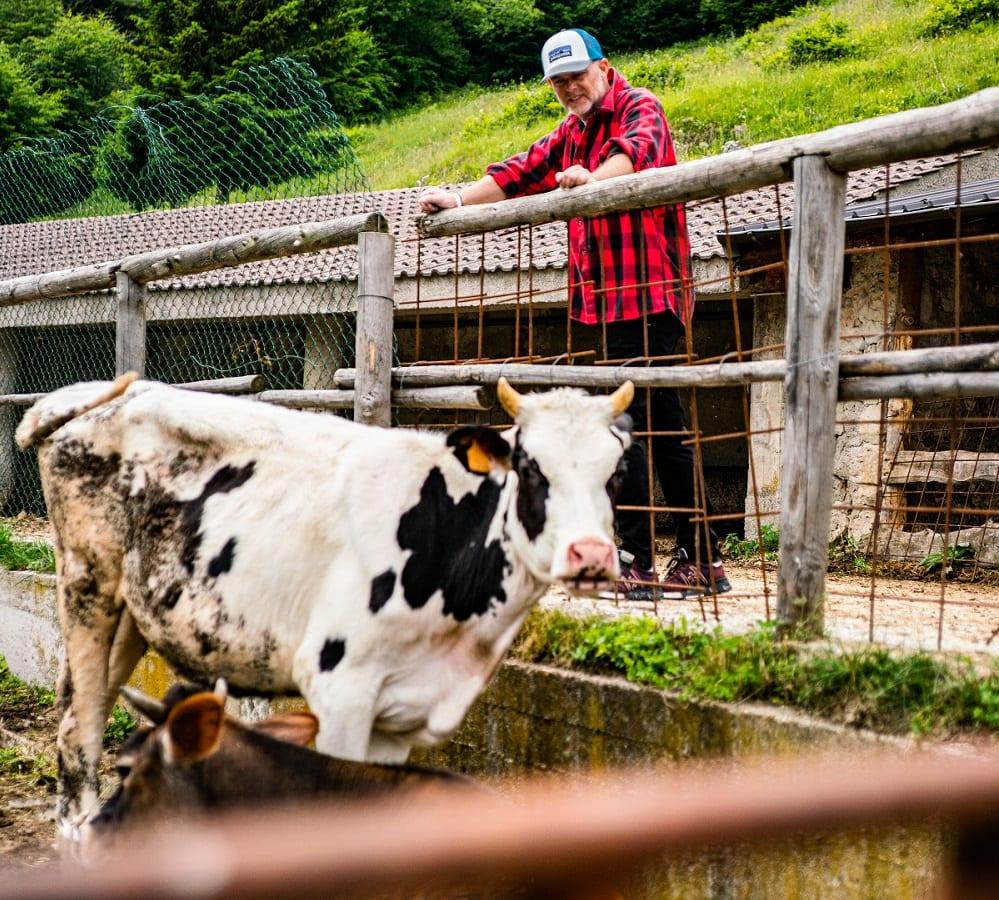 Denis Lovatel con una mucca di Malga Domador