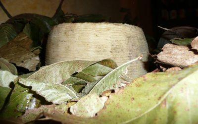 pecorino di Capracotta - Cooperativa agricola San Nicola