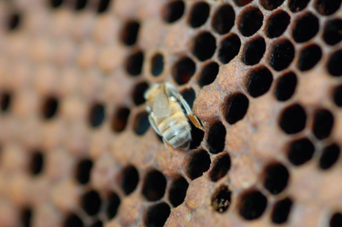 Miele. L'arnia con le api
