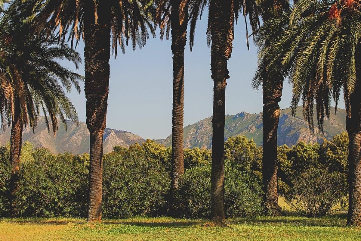 Palme e montagne a Villa Tasca
