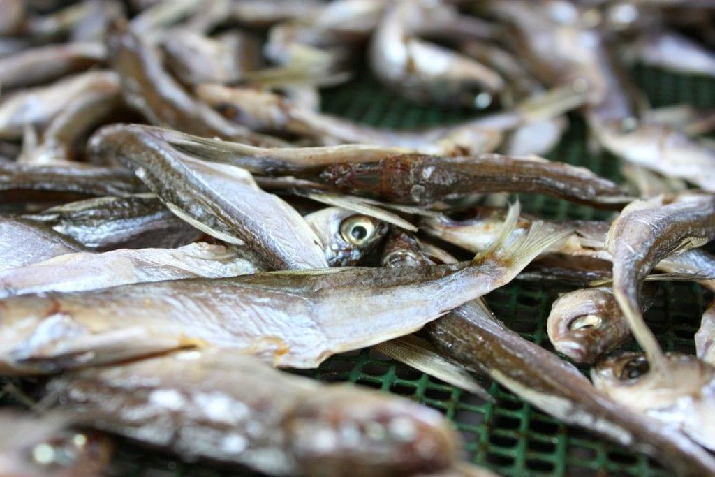 le sardine del lago d'Iseo