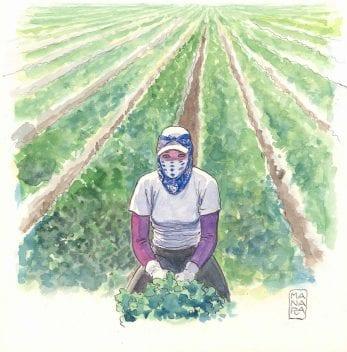 la contadina di Milo Manara