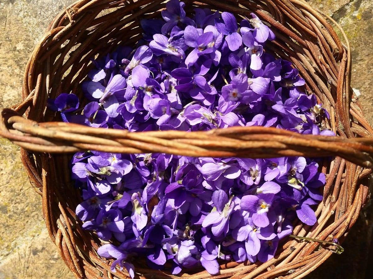 Un cesto di vimini con fiori di viola
