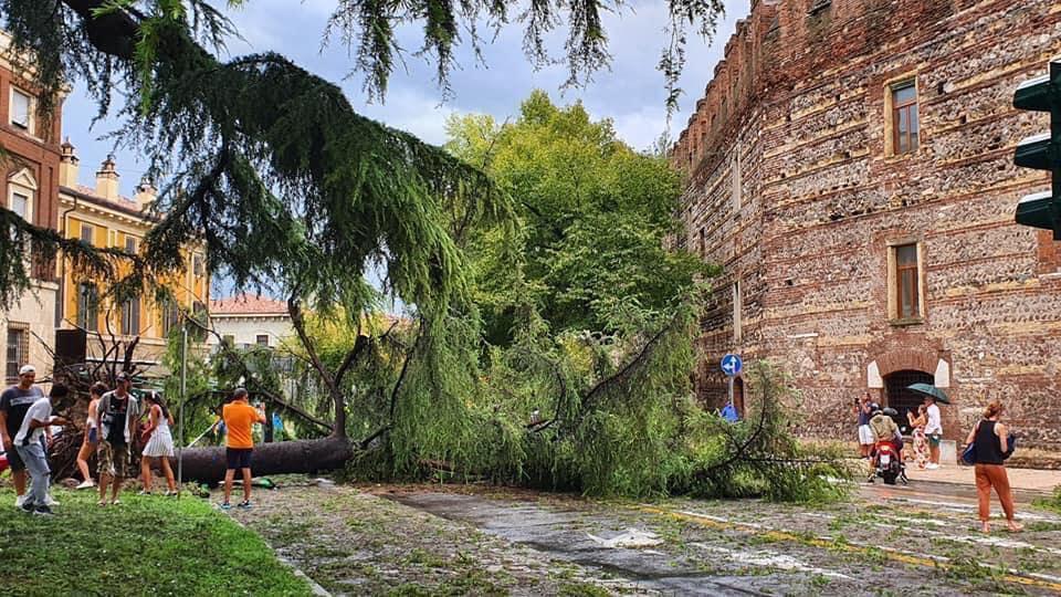 Un albero caduto nel centro di Verona