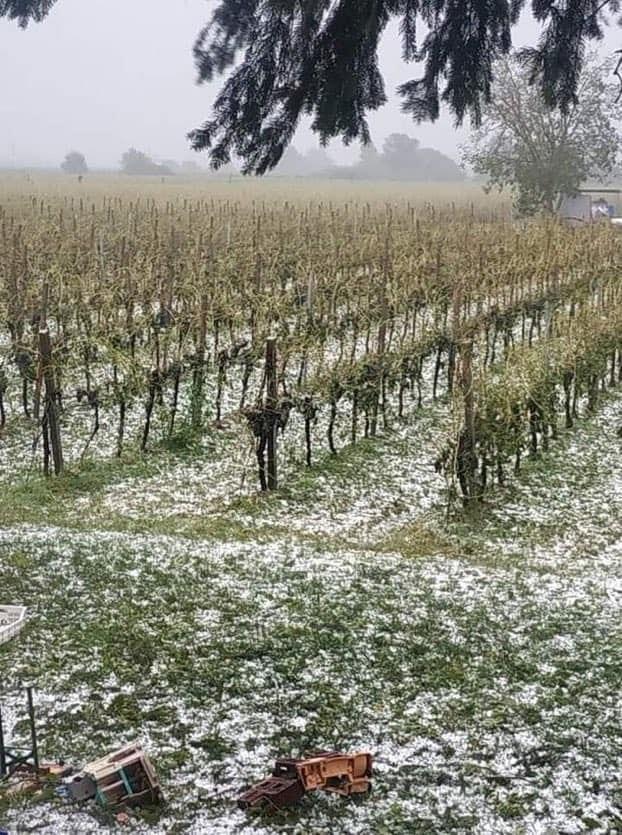 Grandine nelle vigne della Valpolicella