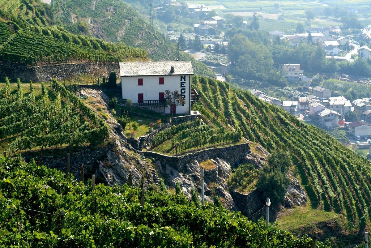 Nino Negri winery