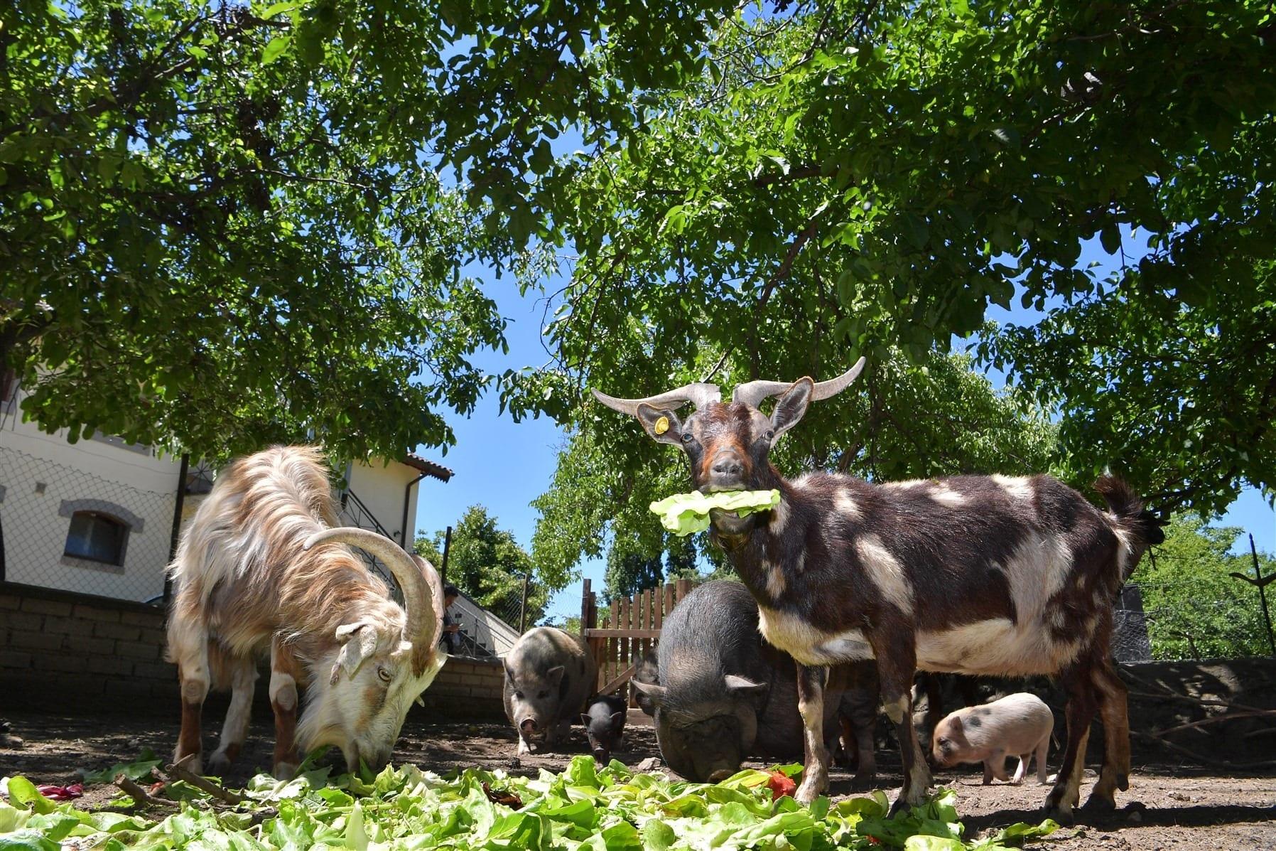Animali da Capodarco