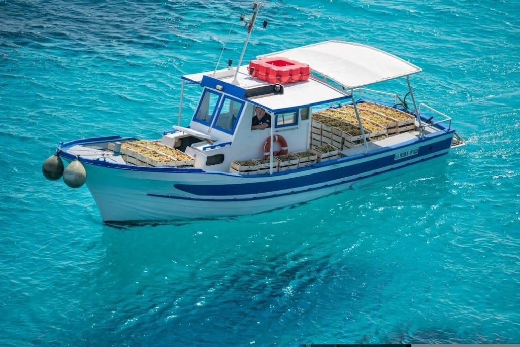 Firriato Vendemmia a Favignana: trasporto delle uve in barca