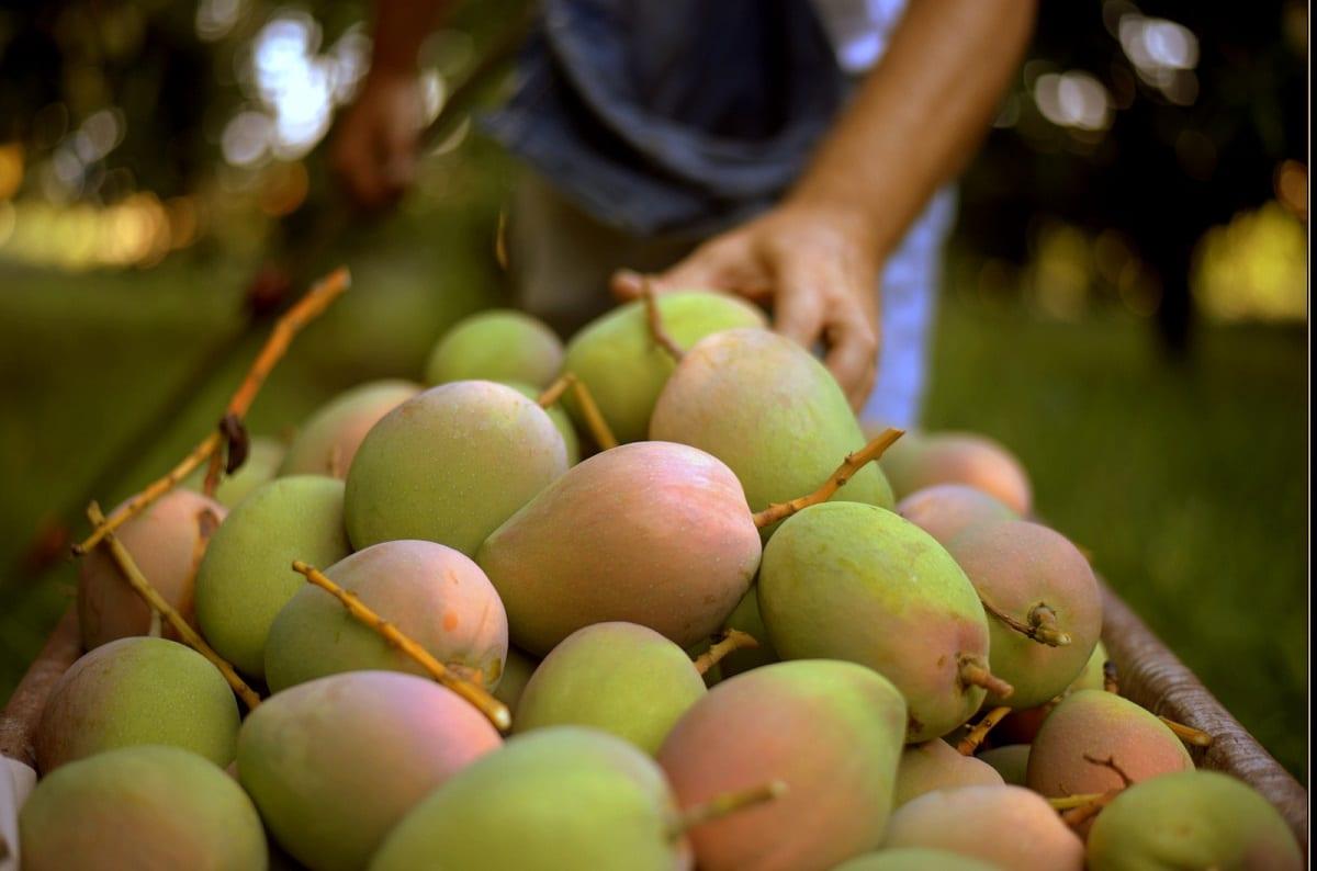 Manghi siciliani