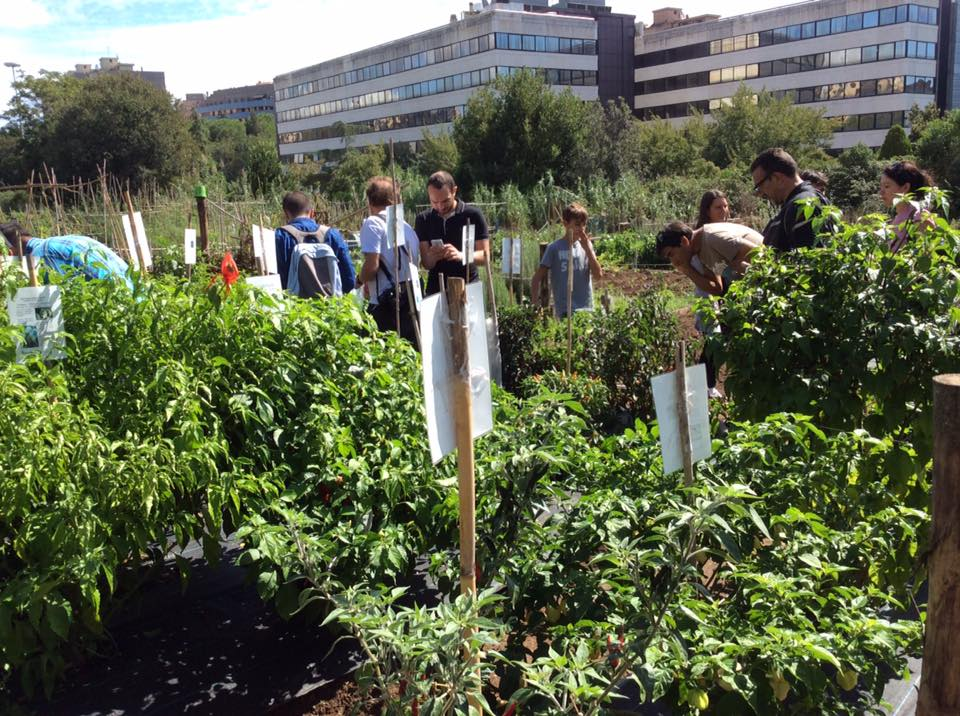 Coltivare un orto urbano
