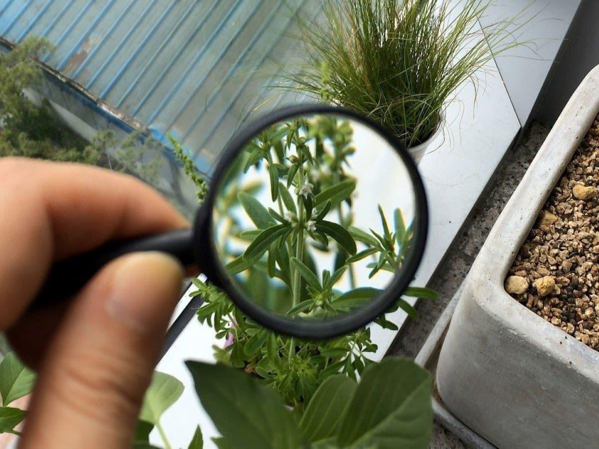 Informazioni tramite app sulle piante di Io Coltivo Italia