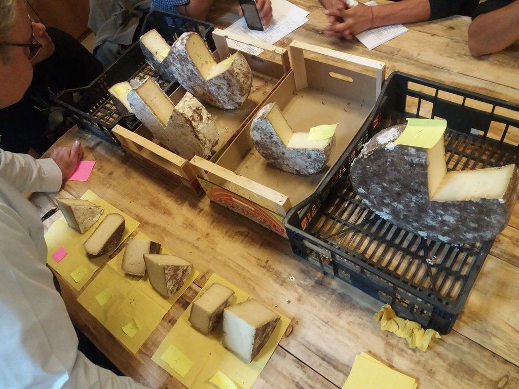 Assaggio dei formaggi per l'affinamento