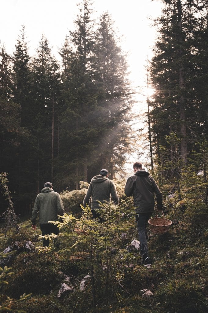 cook the mountain - funghi©Alex Molingjpg