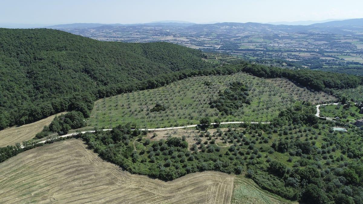 istituto agrario di todi oliveto canonica