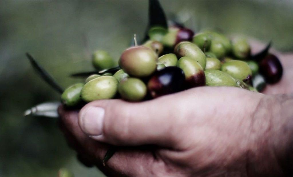 olive pronte per essere molti da muraglia