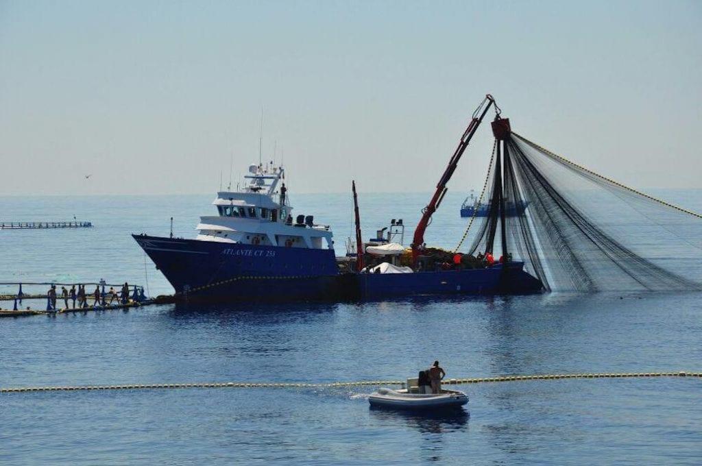 nave Atlante di Testa per la pesca del tonno