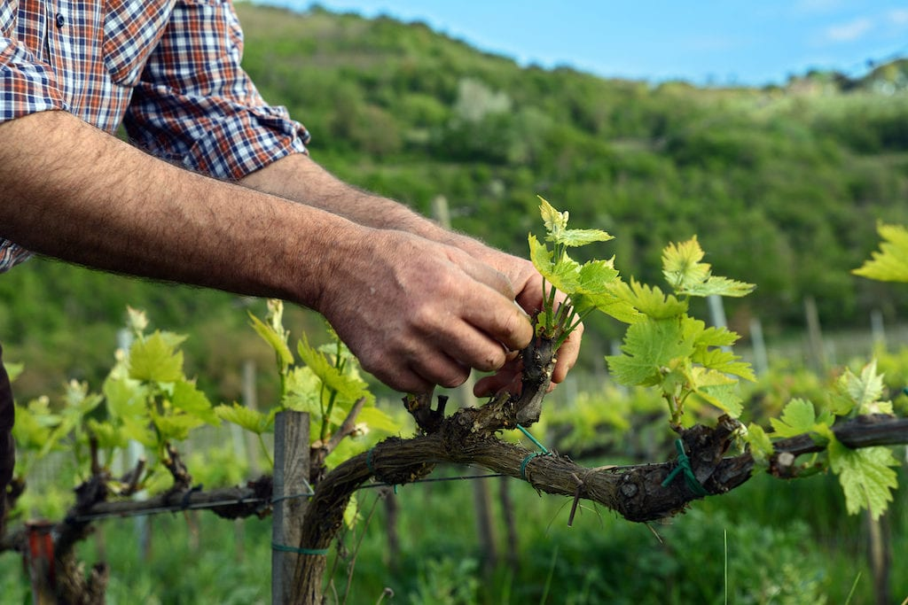 Sustainability and wine: working towards a single certification standard