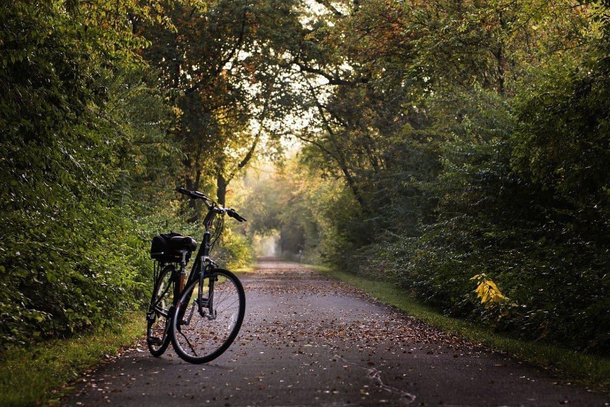 Bike Food stories: i sentieri boschivi