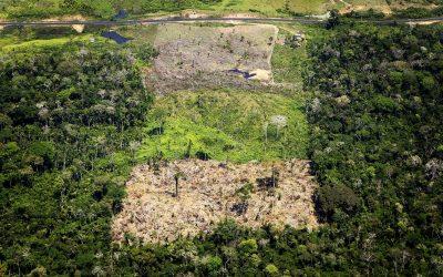 Deforestazione nella foresta amazzonica brasiliana
