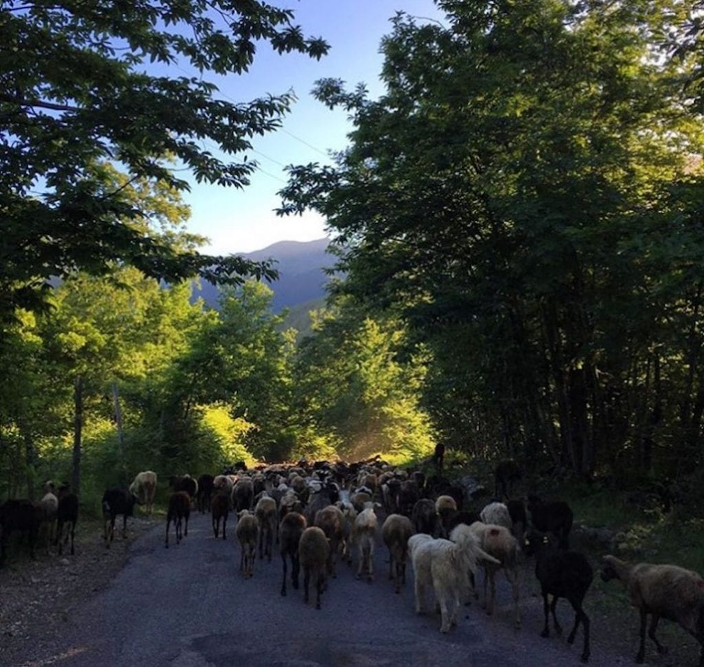 transhumance with a small cheese producer