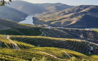 Paesaggi ruali: vigneto in alta montagna