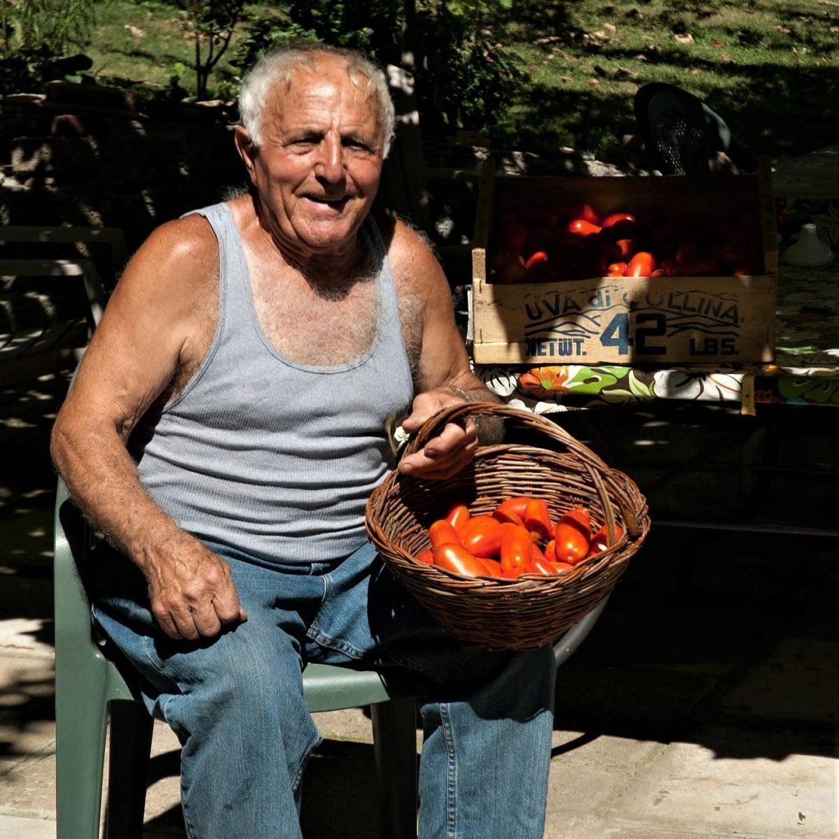 Raccolta dei pomodori nell'orto