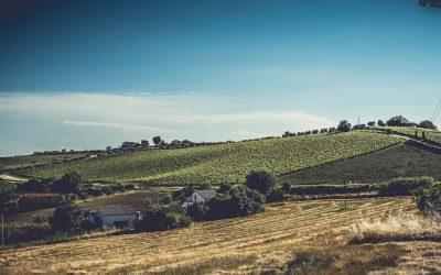 Luigi Valori, l'uomo che parla con le vigne