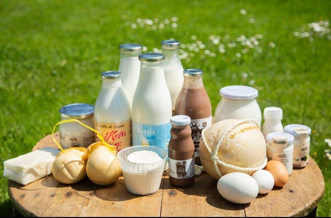 Formaggi e latte Frisona