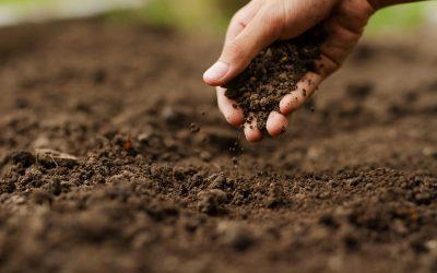 Una mano lavora la terra