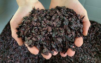 Vinacce parzialmente essiccate per la farina di vinaccioli di GS Natural