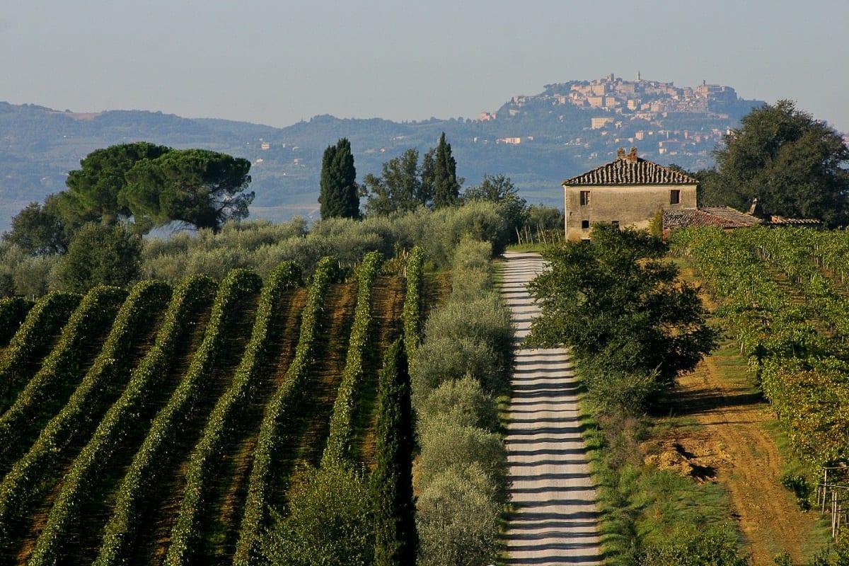 Le vigne di Montepulciano