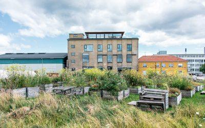 Il giardino sul tetto di Amass a Copenhagen