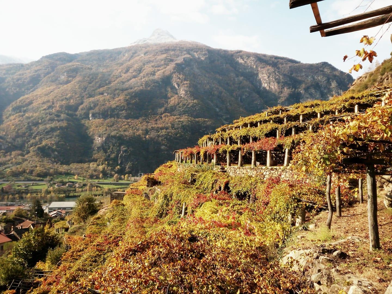 Le vigne di Carema